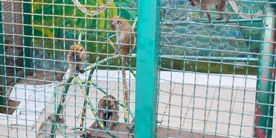 «Белый кенгуру» - интересный зоопарк в городе Сочи, режим работы, фотографии, адрес, как проехать, описание, отзывы.
